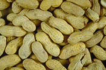 How to Grow Peanuts