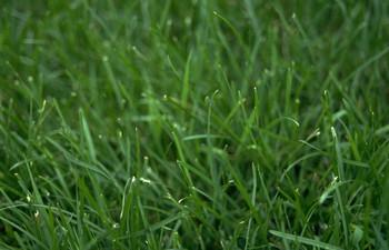 How to Grow Wheatgrass